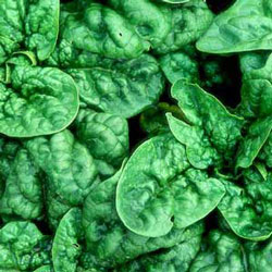 Spinach is a superfood full of iron and good for healthy hair