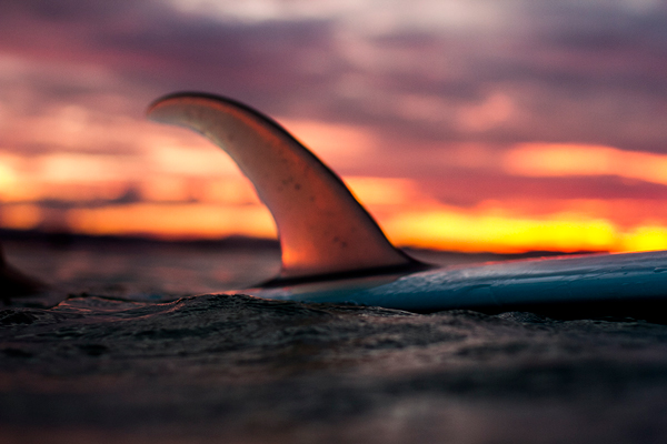 single fin surfboard at sunset. Photo by Fran Miller