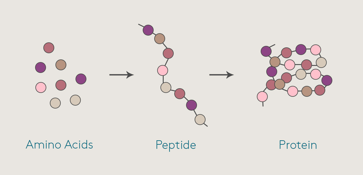 peptides for injury repair